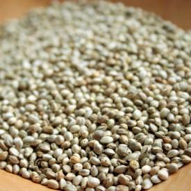 Konopné semienka nelúpané